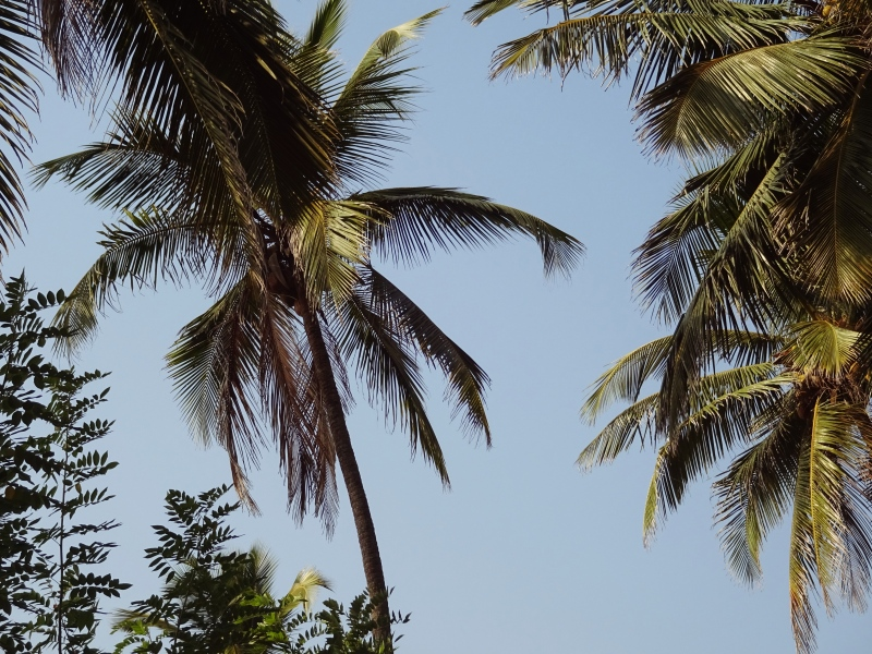 Goa Snapshots